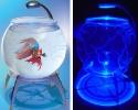 Глобус аквариум