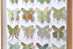 Карты на бабочках