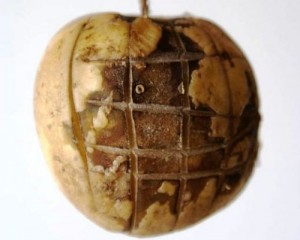 apple-of-the-earth