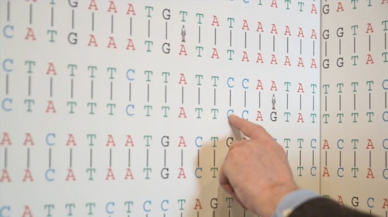 Карта «Сравнение геномов человека и обезъяны»