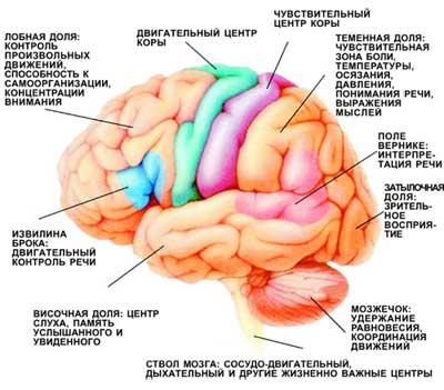 Карты мозга