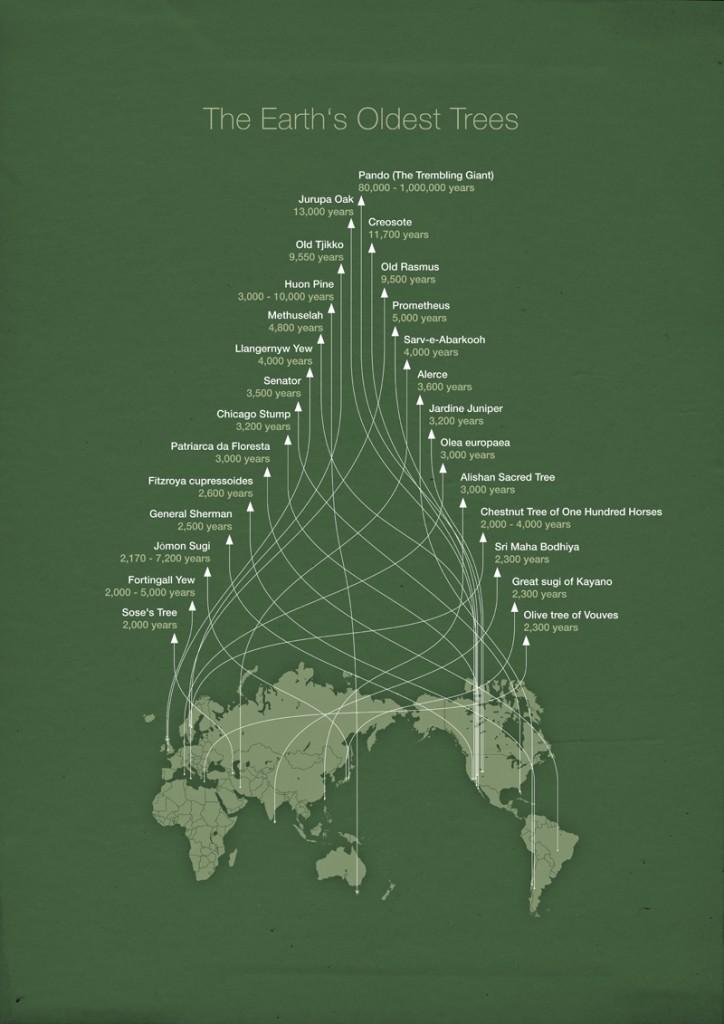 Карта самых старых деревьев