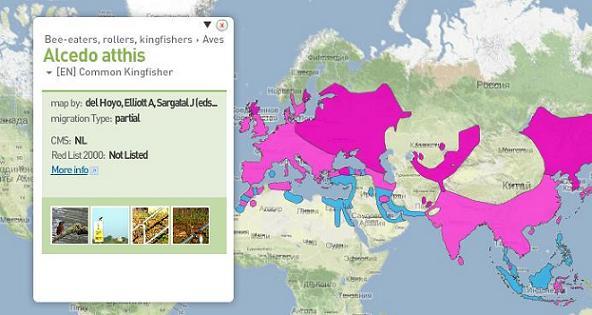 Миграция животных-карта