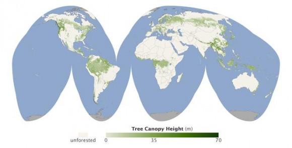 Леса мира на карте