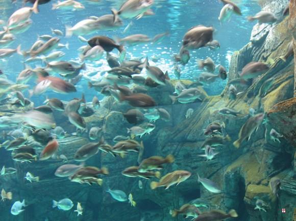 Критский аквариум