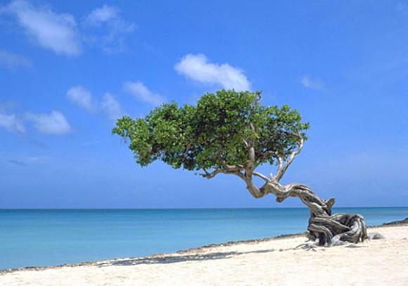 Остров аруба голландская колония в