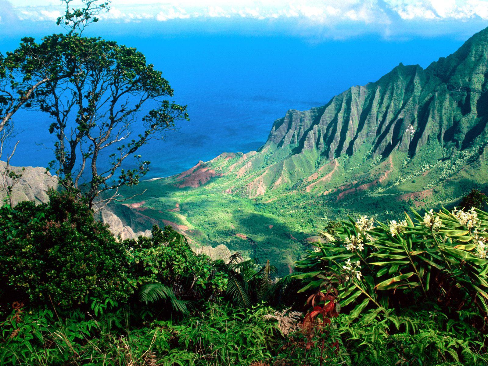 В какую странну мечтаете поехать? Gawai