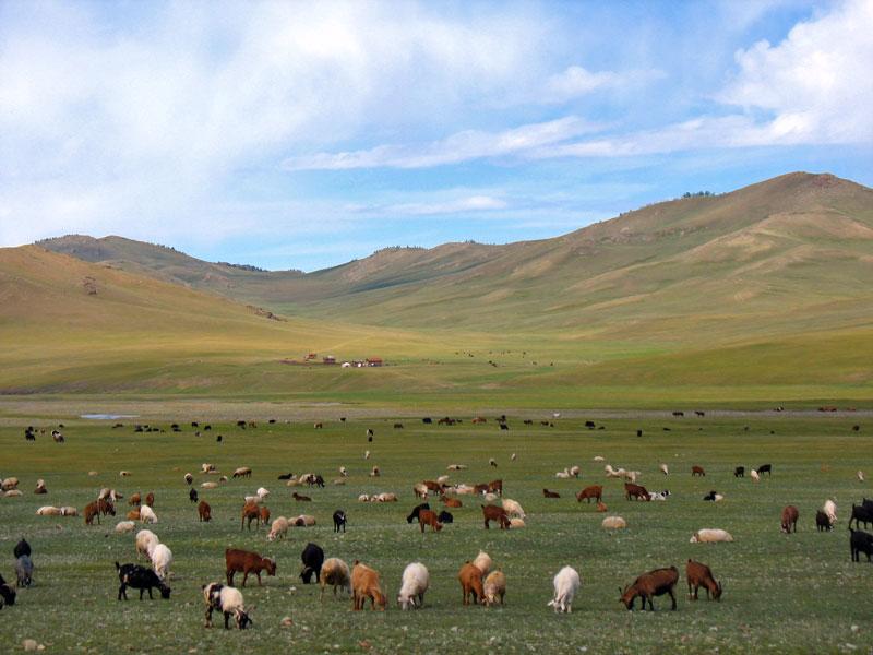 Предприятия Иркутской области не хотят покупать мясо в Монголии из-за его дороговизны