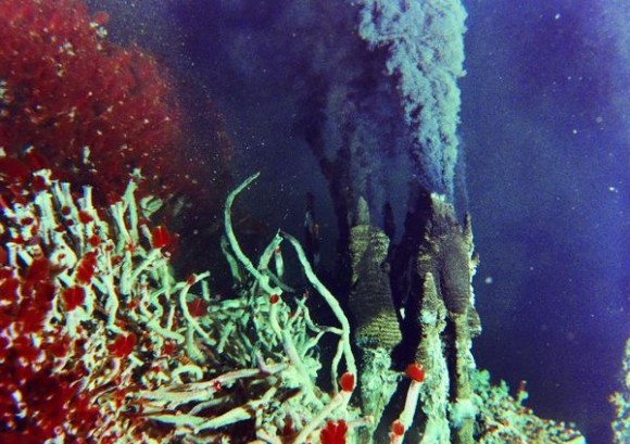 the importance and role of hydrothermal vents and underwater volcano What are hydrothermal vents in 1977, scientists made a stunning discovery on the bottom of the pacific ocean: vents pouring hot, mineral-rich fluids from beneath the seafloor.