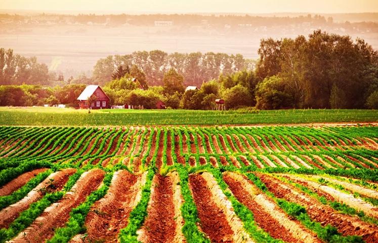 Важность использования органических удобрений в природном земледелии